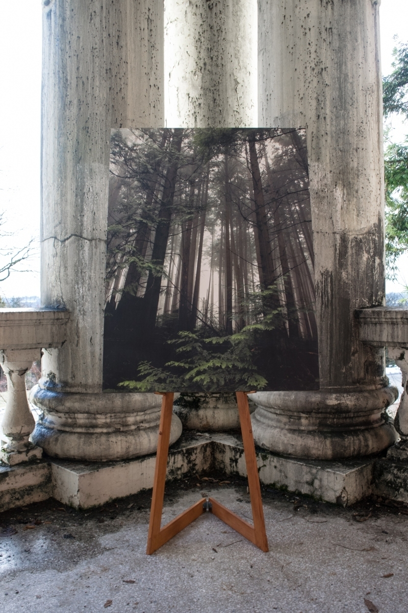 "forest fog 36"" x 48"" 11 ed. archival print hand mounted on wood"