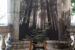 """forest fog 36"""" x 48"""" 11 ed. archival print hand mounted on wood"""